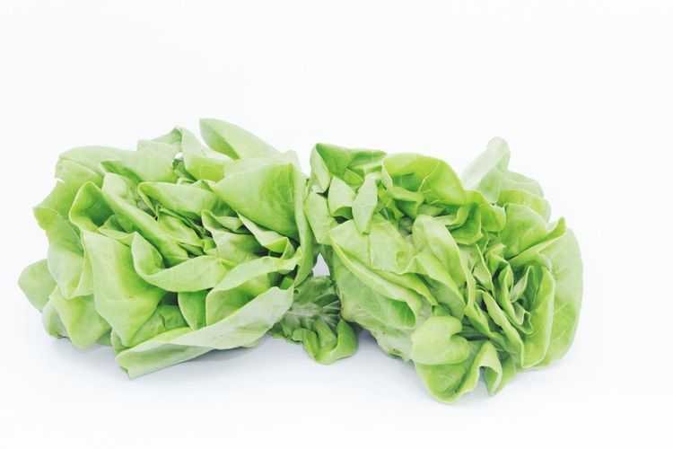 Butterhead on isolated white background Isolated White Background Isolated Background Butterhead Lettuce Lettuce Salad Lettuce White Background Leaf Vegetarian Food Vegetable Cut Out Green Color Food And Drink Leaf Vegetable Low Carb Diet Cabbage