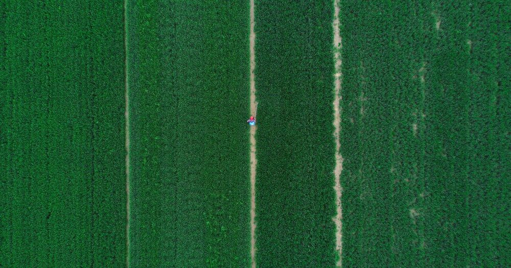 Aerial view of agricultural field