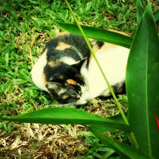 Singapore Void Deck Cats. Catmolester Kucing Manja Cats First Eyeem Photo
