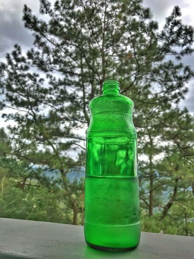 Green, pine, mountain, nature, Green Color Tree Day Bottle Cold Temperature No People Outdoors Sky Nature Close-up