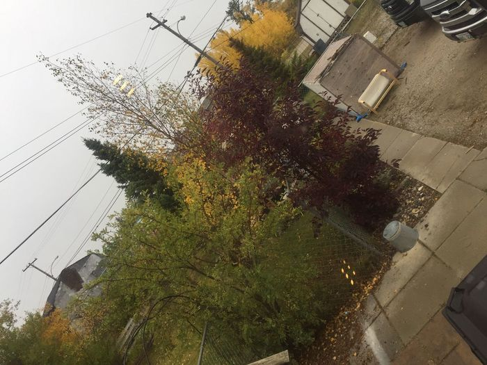 Fall Weather Trees Beauty In Nature Sky Gray Yellow Green Red Wake Way No People Morning Time :) Outdoors Electricity Pylon Power Line  Cable Electricity  Nature Growth Architecture Building Exterior Day Paint The Town Yellow The Week On EyeEm EyeEmNewHere