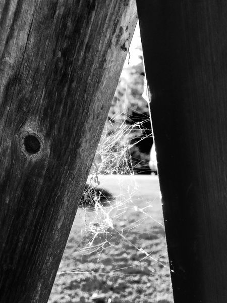 Wood - Material Spider Web Spider Silk Black And White Black And White Photography Black And White Collection  Abandoned Dirty Dirty Place Wood Wooden Wooden Texture Wooden Post Focus On Foreground Spiderweb Spider Webs Spiderwebs Spidersweb Spider Nature_collection Eyenaturelover Spiderworld