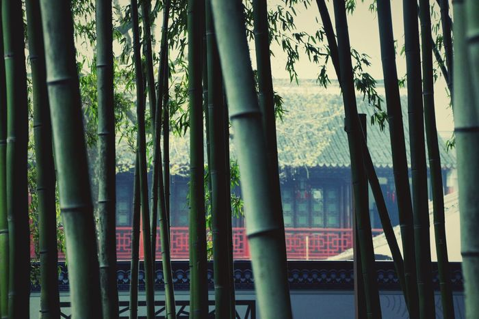 Check This Out Hanging Out Streetphotography Garden Garden Photography Architecture Plant Colors EyeEm Best Shots Eye4photography  Light And Shadow EyeEm Nature Lover EyeEm Best Edits EyeEm Meetup Shanghai Shanghai, China