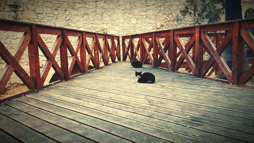 Cats Cats Of EyeEm Cat Planks Wooden Bridge Wood Railing Wooden Railing City Life Palma De Mallorca Mallorca Animals Animals In The Wild Lantern Stone Wall Wall No Way Out Nature