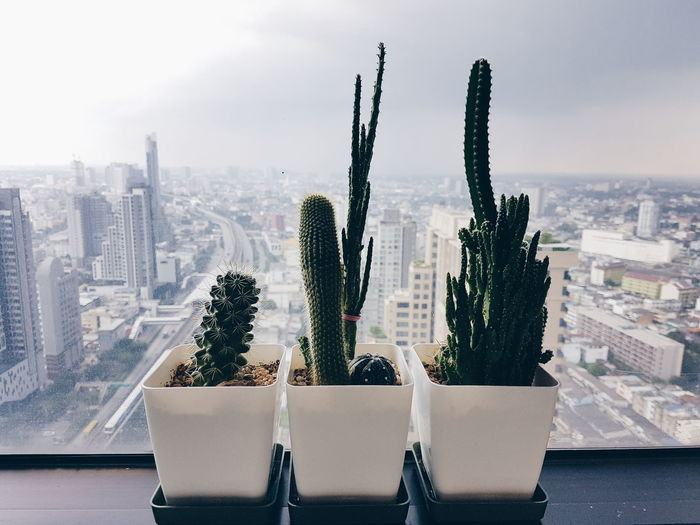 Potted plants and cityscape against sky