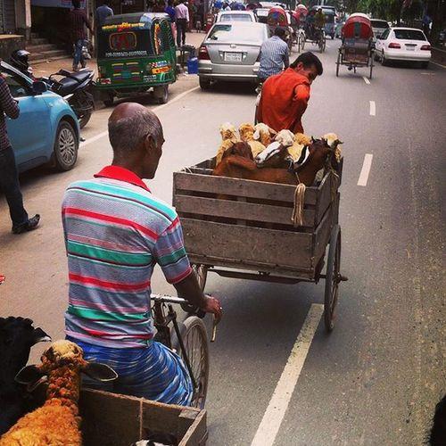 Street ! 25.08.2015 Js Jashimsalam Lategram Dhaka Street Animal Sheep Goat Transport Rickshaw Van Dailylife Photojournalism Documentary Instagram Bangladesh Everydaybangladesh