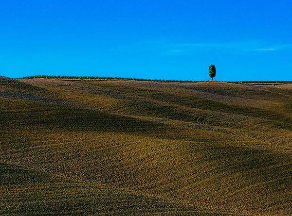 Lonely tree... Italy Italia Tuscany Toskana Pienza Fields Landscape Canon Canon6d Tree Drzewo Pole Toskania Europe Europe Trip Visiting View