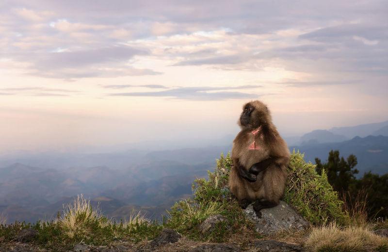 Monkey sitting on mountain against sky