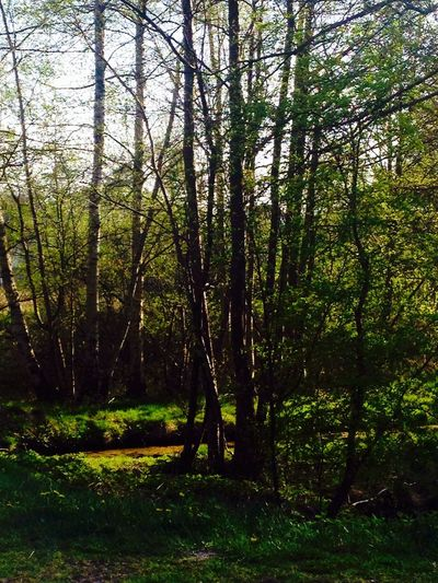 Prerow vaterwald
