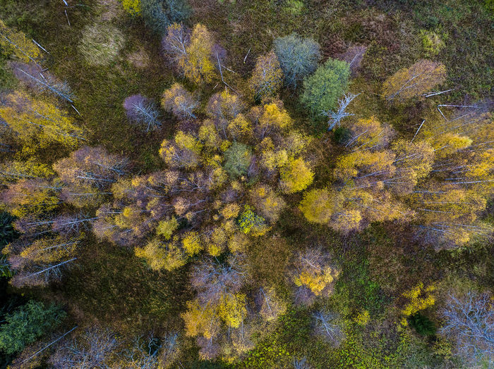 Autumn colors from above. Plant Growth Day No People Nature Beauty In Nature Tree Full Frame Tranquility Backgrounds Autumn Outdoors Green Color High Angle View Change Yellow Water Close-up Underwater Moss Lichen Marine Drone Photography Sweden
