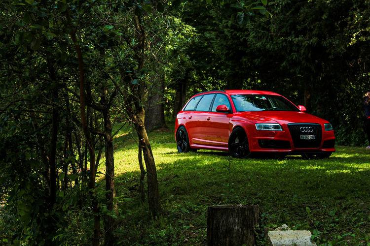 Tree Red Car