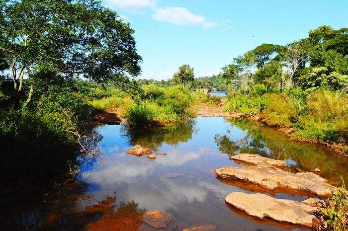 Iguazu 🌈🔆 Taking Photos Nature Beatifulview Green Green Green!  Water Reflections