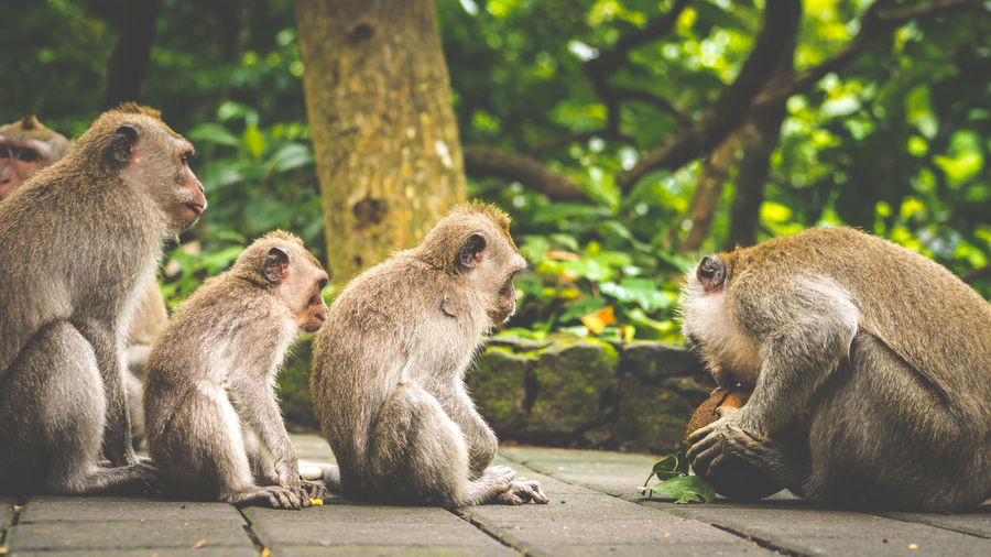 Side view of monkeys sitting on footpath at forest