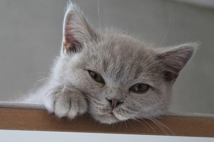 Whisker Sitting