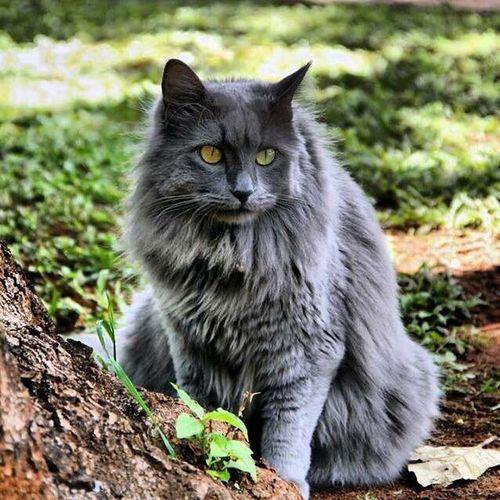 Cats Domestic Cat Feline Pets