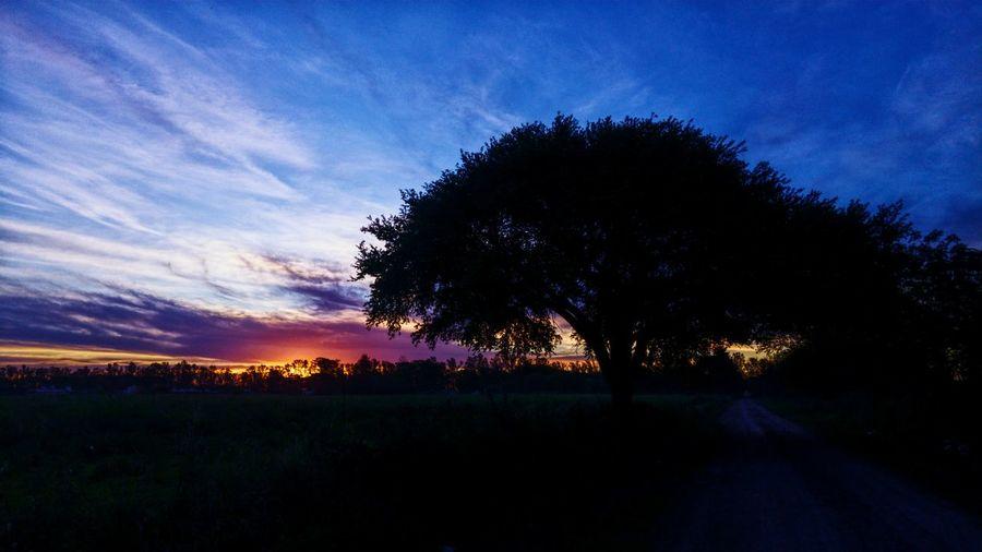 Tree Sunset Sky Landscape Cloud - Sky Dramatic Sky Single Tree