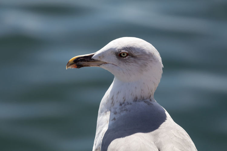 EyeEm Best Shots EyeEm EyeEm Best Pics Eyeemphotography Animal Themes Animal Animal Wildlife Animals In The Wild Bird Seagull Nature Seagulls Close-up Outdoors Beak Animal Head  Focus On Foreground Bird Photography Birds Of EyeEm  Bird Watching Side View Sea Water