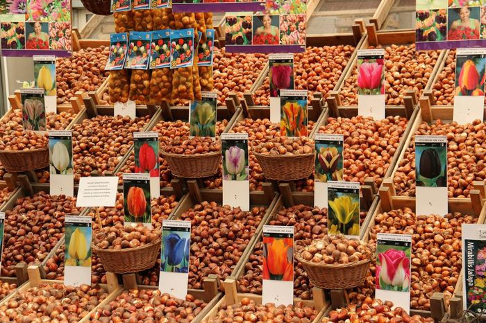 Abundance Arrangement Colour Of Life, Display Food For Sale In A Row Large Group Of Objects Market Market Stall Multi Colored Price Tag Repetition Retail  Sale Shop Still Life Store Street Market Tulip Bulbs Variation Beautifully Organized