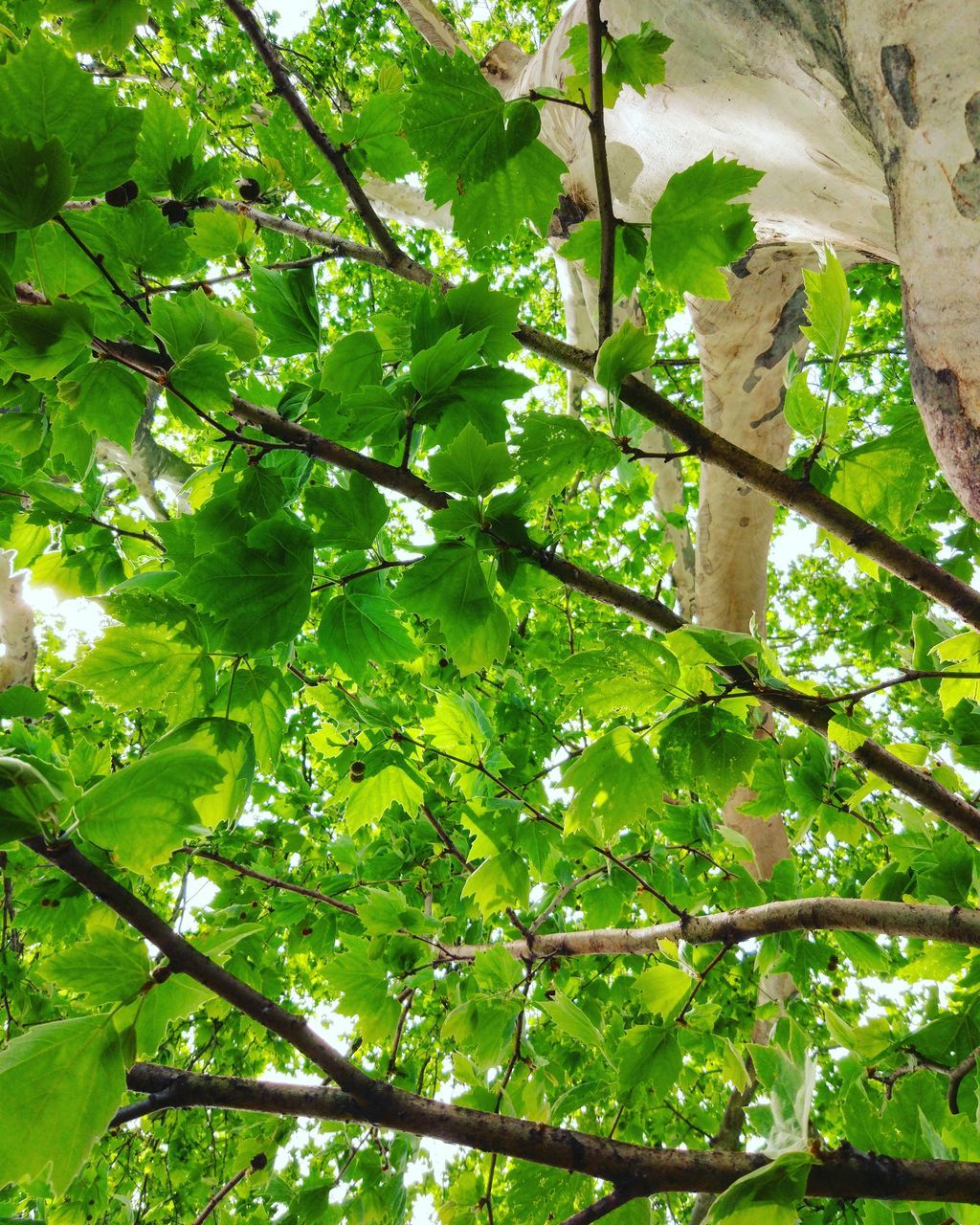growth, tree, green color, low angle view, branch, nature, leaf, no people, day, beauty in nature, outdoors, plant, freshness, close-up