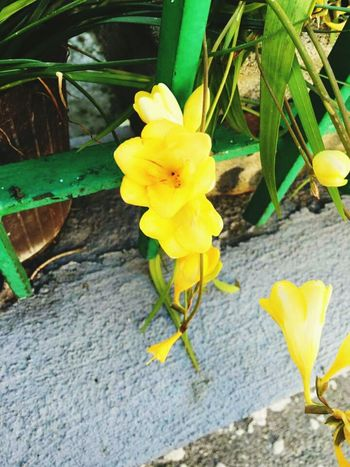 Aspettando la primavera Flowers,Plants & Garden Good Morning Marzo Italy Napoliphotoproject EyeEm Gallery
