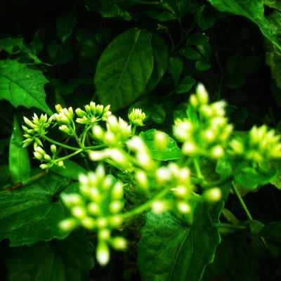 EyeEmNewHere Leaf Green Color Plant Growth Nature Outdoors Sunlight Beauty In Nature Social Issues No People Outdoor Pursuit Beauty Agriculture Day Summer Freshness Close-up Rural Scene Plant Part Botanical Garden