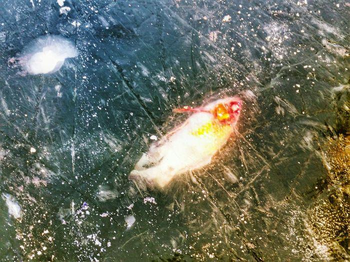 My Winter Favorites Fish