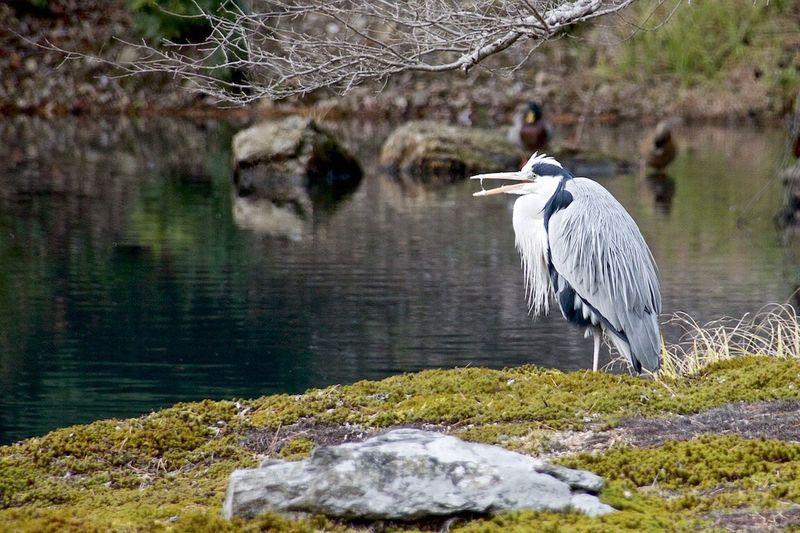 Cranes Birds Of