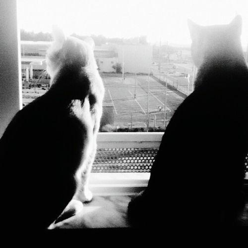 Sunbathing Vila Franca De Xira Light And Shadow Sunny Day Morning Cat Catlovers Catoftheday Black & White