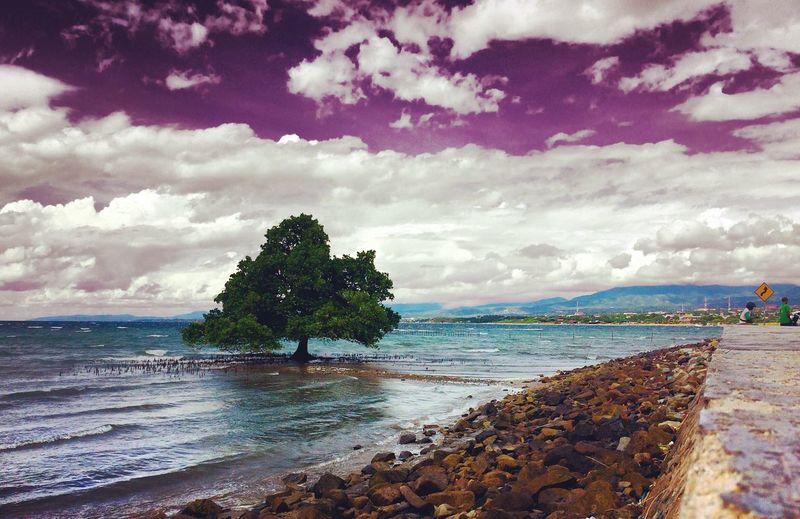 Indahnya Pohon yang tumbuh di pinggiran laut First Eyeem Photo