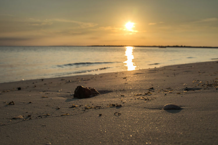 The sea shell,