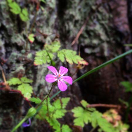 Enjoying Nature Flower Forrest IPhone 5S