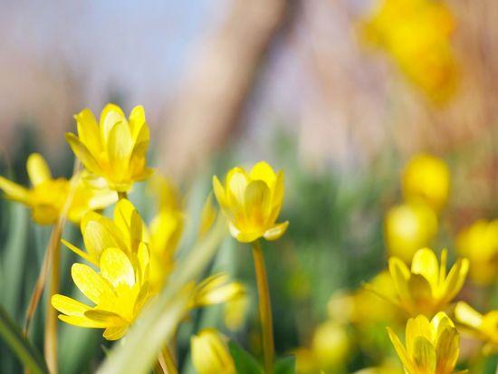 風まかせ… ゆらりゆるりと… 春風 Flower Collection EyeEm Nature Lover EyeEm Best Shots Eyeemphotography EyeEm Gallery 日だまり Beauty In Nature EyeEm Best Shots - Nature Springtime 春風 Blossom