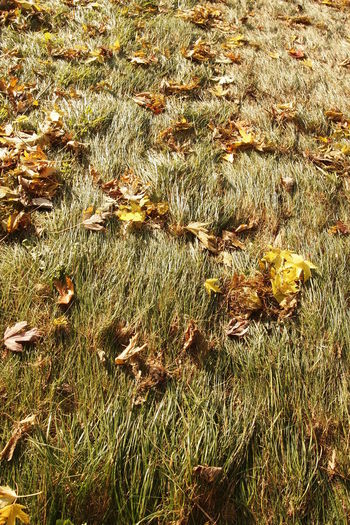 Autumn Brown