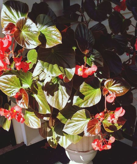 Relaxing and enjoying the sunshine Plant Potted Plant Out My Front Door Late Afternoon Light Sunlight And Shadow
