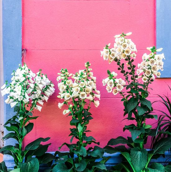 Flower Growth Plant Blooming Nature No People Leaf Beauty In Nature Day Outdoors Petal Multi Colored Wall Wall Collection Getting Inspired Getting Creative Textures And Surfaces Textured  Freshness Fragility Freshness Building Exterior Bougainvillea Flower Head Close-up