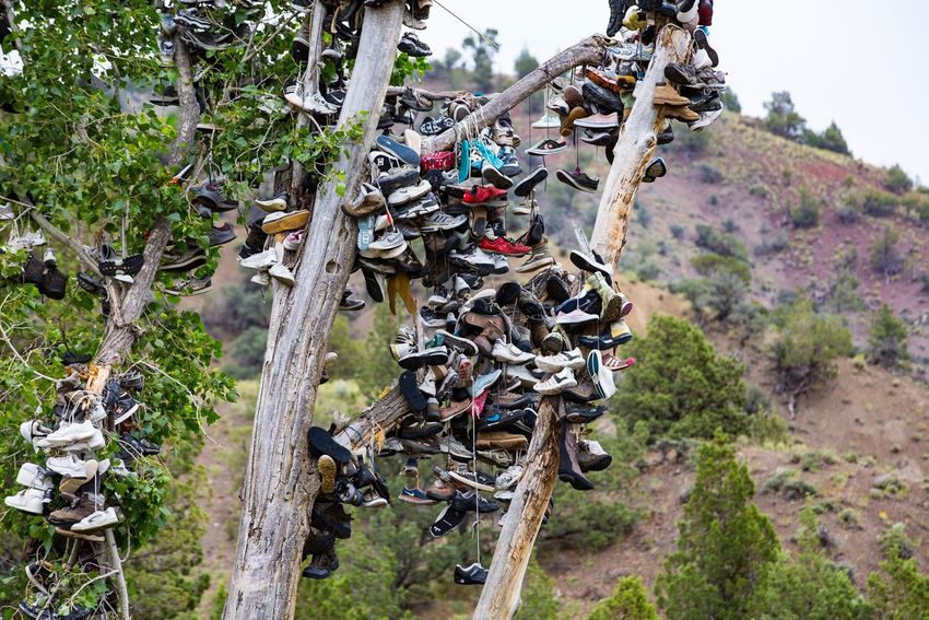 Shoe Tree Outdoors No People Shoes Hanging Tree Good Luck Shoe Tree Oregon Large Group Of Objects