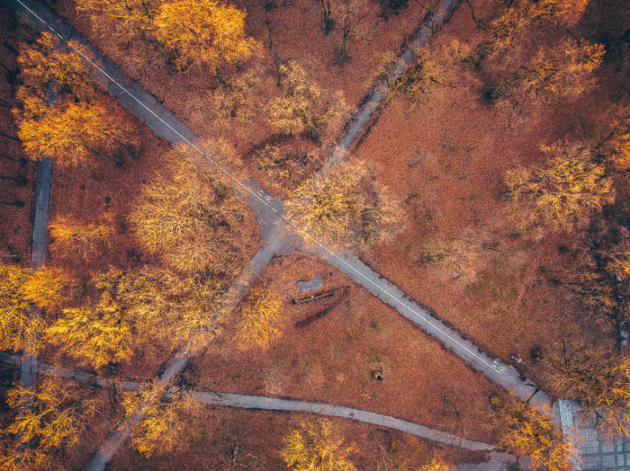 Walking paths City DJI Mavic Pro Drone  Aerial View Autumn Autumn Collection Beauty In Nature Birds Eye View Change Day Europe Fall Forest High Angle View Land Landscape Mavic Mavic Pro Nature No People Non-urban Scene Orange Color Outdoors Plant Road Scenics - Nature Tranquil Scene Tranquility Transportation Tree Walking Paths