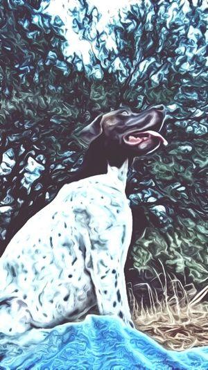Dogslife Birddog Gsp German Shorthaired Pointer Enjoying Life Hanging Out Dogsofeyeem Ratherbehunting The Best Friend Dog Days