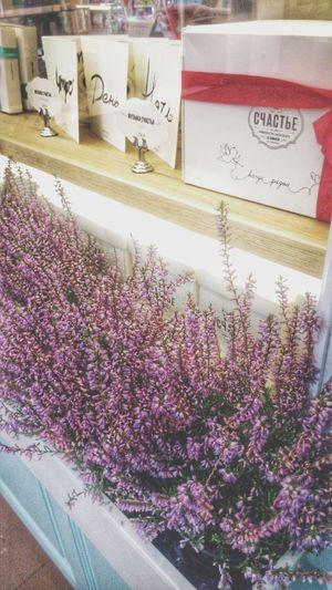 СЧАСТЬЕ Happyness Day Outdoors Saint-Petersburg Galary No People Flower Freshness Nature