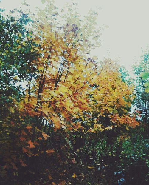 Green Nature Non-urban Scene No People Autumn Season  Beauty In Nature Day Memories