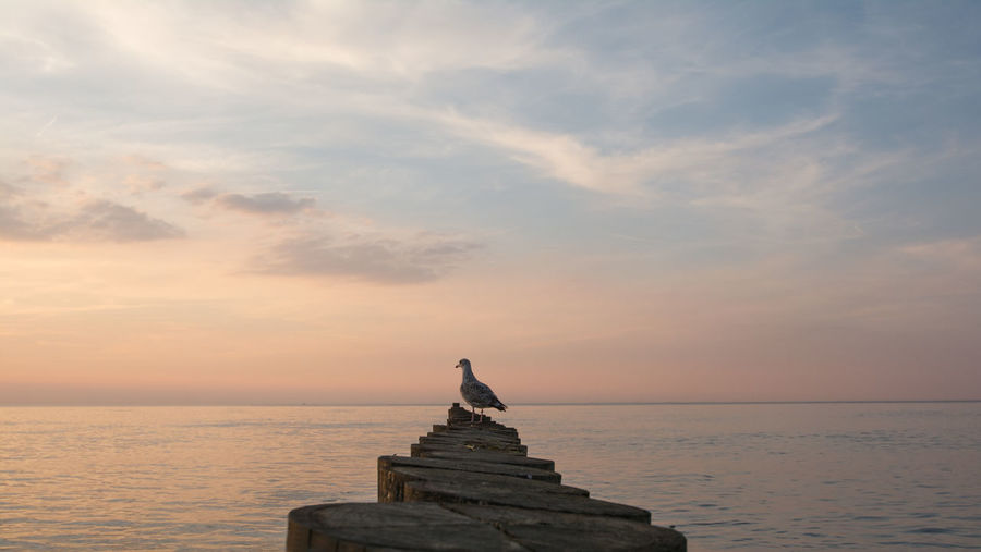 Sculpture of sea against sky during sunset