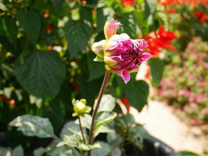 Eyem Flowers