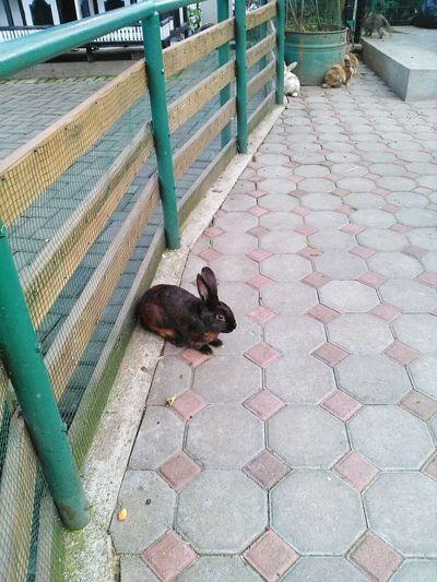 Rabbit 🐇