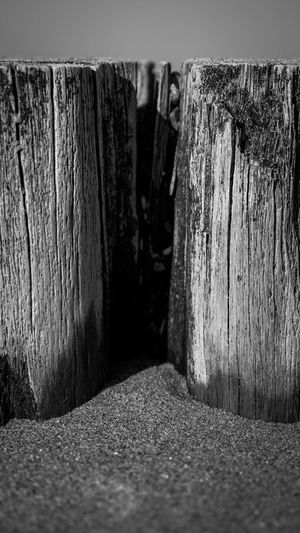 Tree at the Beach in Black and White Architecture Black And White Blackandwhite Blackandwhite Photography Built Structure Close-up Day Focus On Foreground Footpath In A Row Long Nature No People Outdoors Pattern Rock Rough Selective Focus Solid Street Textured  Wall - Building Feature Wood Wood - Material Wooden Post