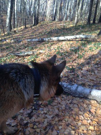 Pets Corner собака лес прогулки весна