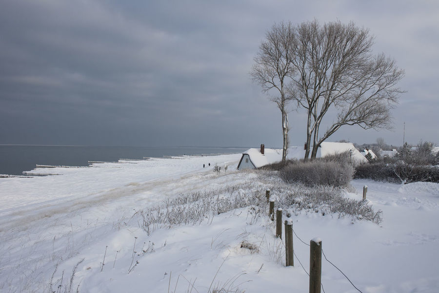 Snowy Beach at classic Ahrenshoop view Baltic Sea Winter Cloudy Sky Oceanside Ahrenshoop Bare Tree Beach Beauty In Nature Branch Cold Temperature Day Horizon Over Water Landscape Nature No People Outdoors Scenics Sea Seascape Sky Snow Tourist Destination Tranquil Scene Tranquility Tree Winter