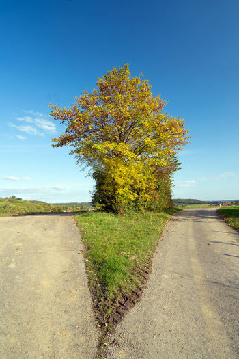 Tree by road against sky during autumn