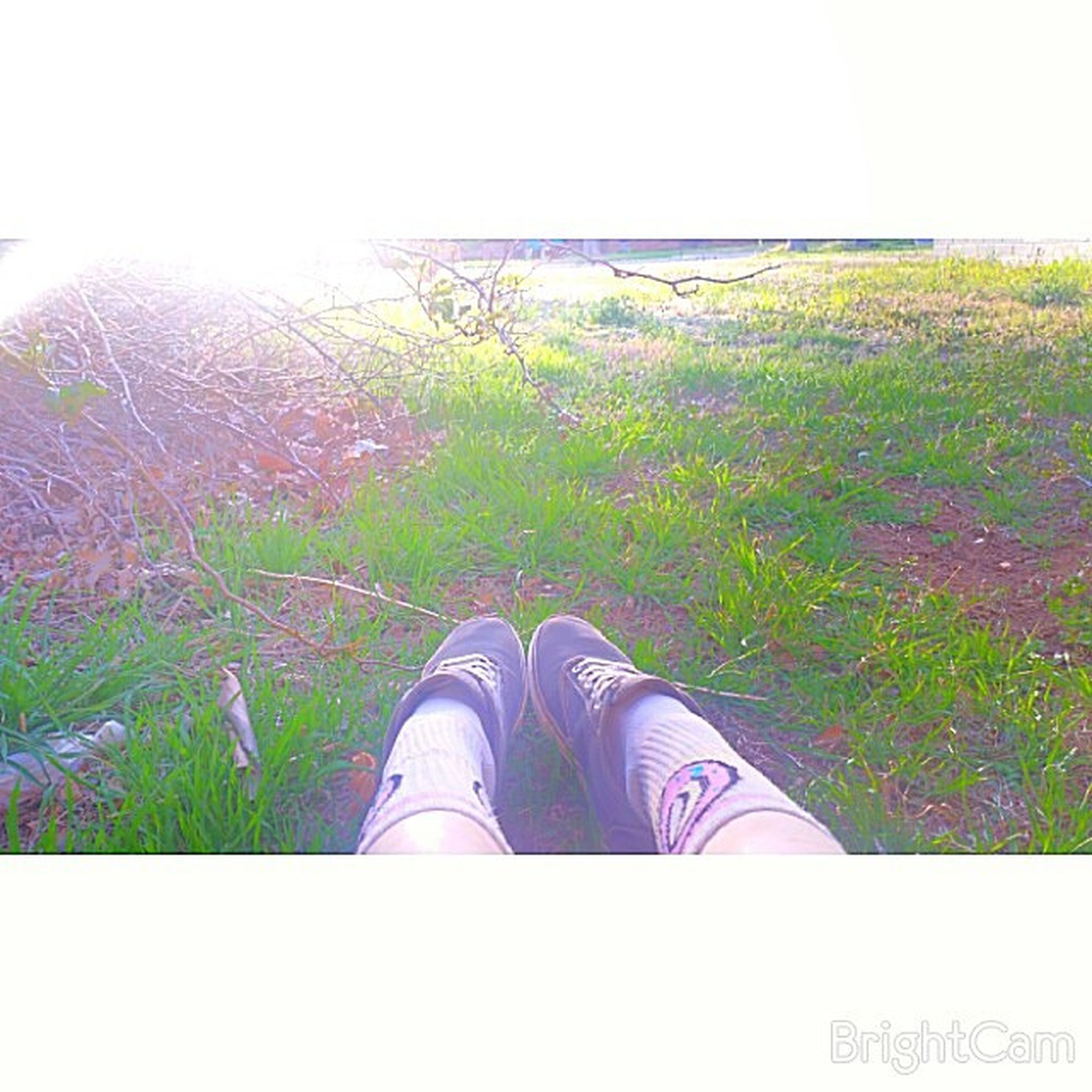 low section, lifestyles, leisure activity, grass, field, person, men, landscape, nature, standing, grassy, growth, green color, beauty in nature, unrecognizable person, shoe
