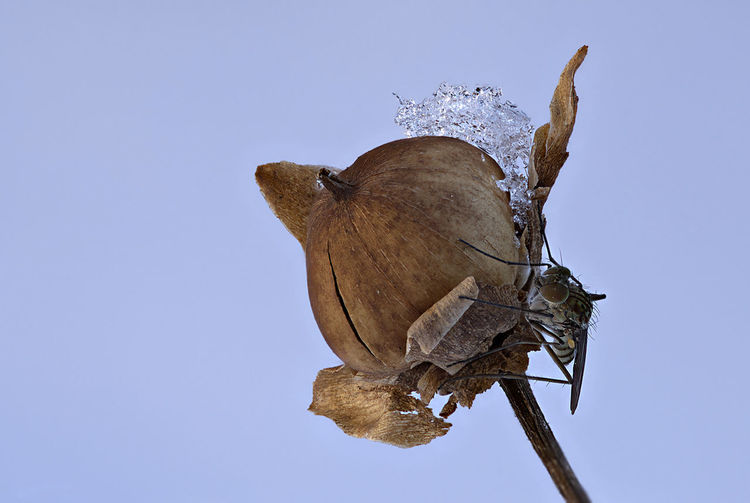 Close-up of butterfly on dry plant against sky