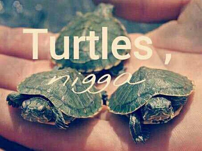 I ♥ Turtles